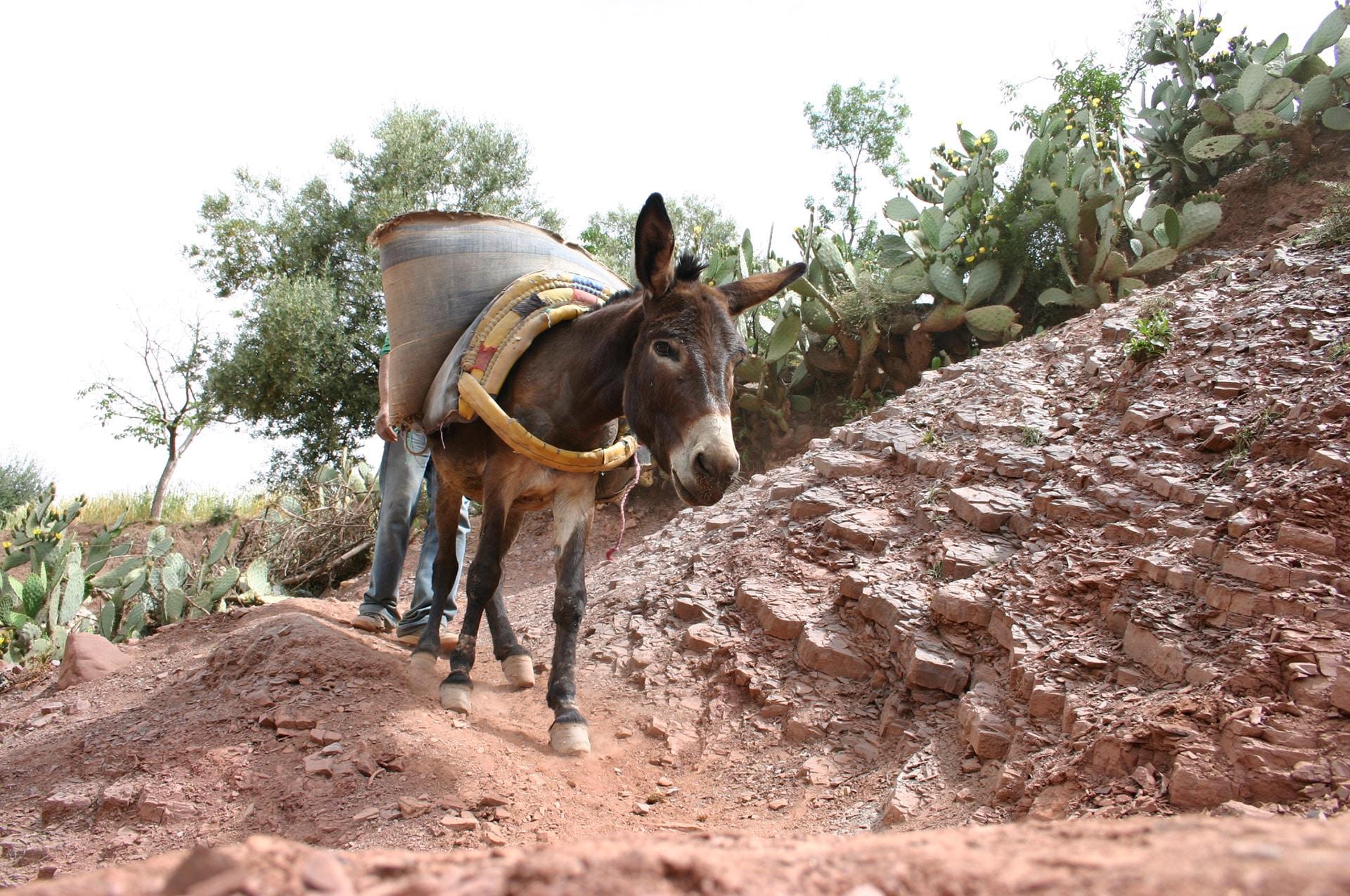 vorschul- und brückenbauprojekt in marokko